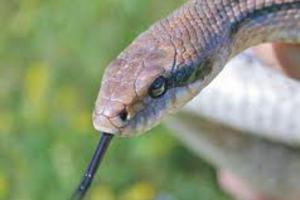 Τα φίδια δεν «έχασαν» το λαιμό τους